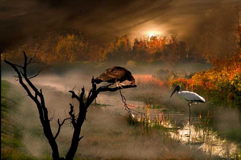 Surreal Nature the Everglades Florida wildlife of Birds and Sunset