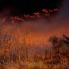 0150 Everglades on fire _5